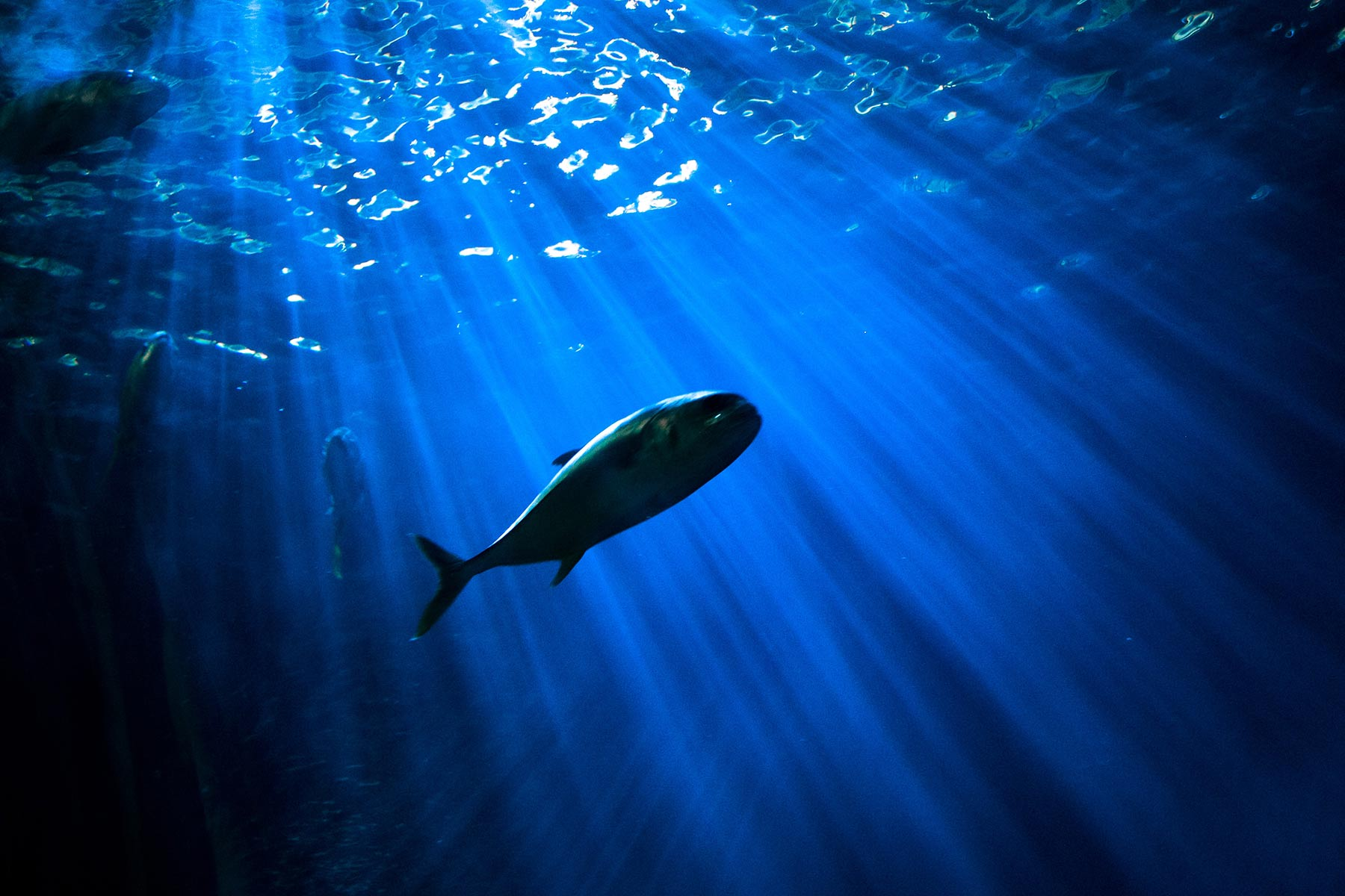 World's first sustainable tuna fishery certified in US
